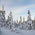Lappland © Katrin Schmidt