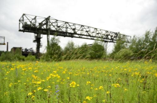 Natur und Industrie im LaPaDU