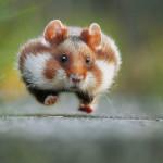 """Fotowettbewerb Abenteuer, 22. Platz: Julian Rad, """"Mit vollen Backen"""""""