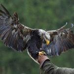 © Greifvogelstation Hellenthal