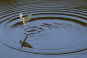 Wahrnehmung und Fotografie, © Harald Gorr