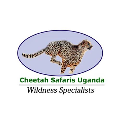cheetah_500.png