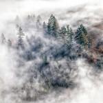 """3. Platz: Pascal Meier, """"Nebel im Wald"""""""
