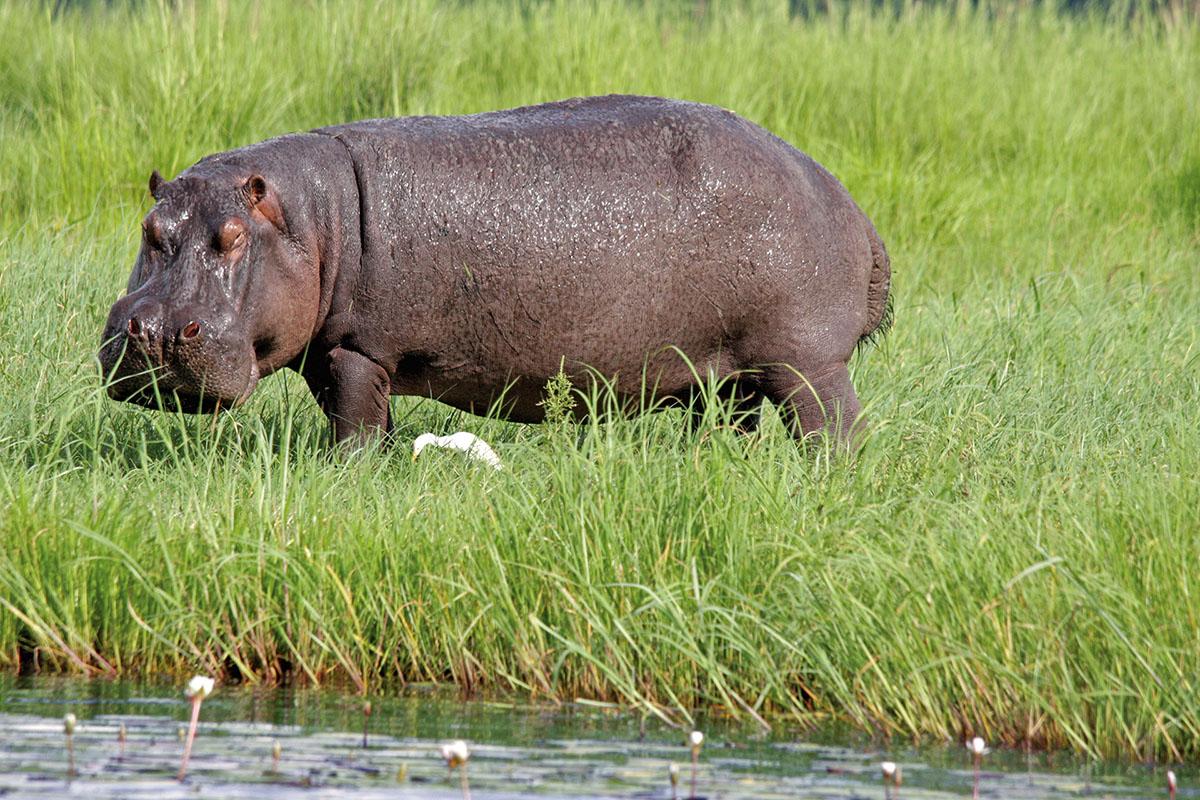 Botswana: Schwimmpause