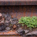 Natur trifft Industrie © Hans-Peter Schaub