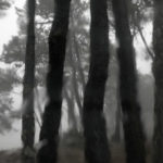 Gespensterwald im Regen, © Katrin Schmidt