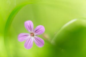 Blütenträume, © Hans-Peter Schaub