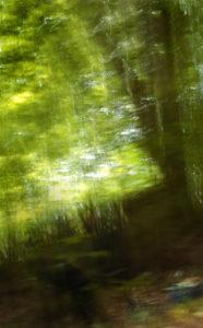 Naturbild und Epoche, © Martin Timm
