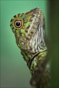 Borneo, © Florian Smit