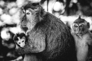 Affenwald in Ubud, © Ferdinand Lukas