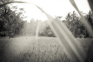 Hinterland Ubud, © Ferdinand Lukas