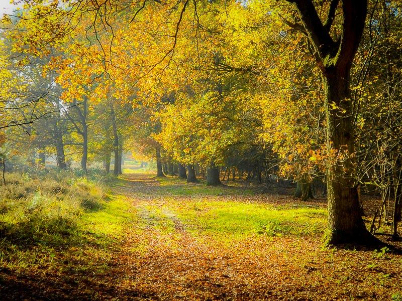 Herbst fotografieren, © Katrin Schmidt
