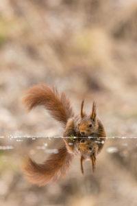 Tierfotografie, © Andreas Hütten