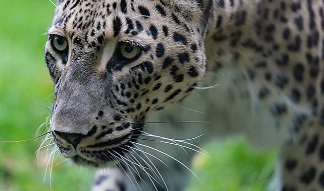 Tierfotografie im Zoo, © Klaus Wohlmann