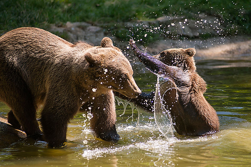 Romanian Bear Sanctuary