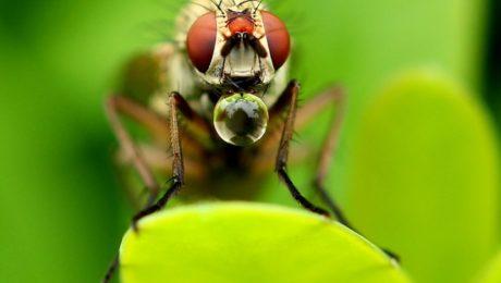 © Margarete Hartert, Bienenfleiß, Blende-Fotowettbewerb
