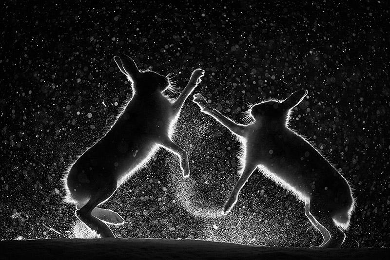 Streit im Schnee, ©Erlend Haarberg