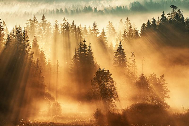 Waldwelten, © Kilian Schönberger