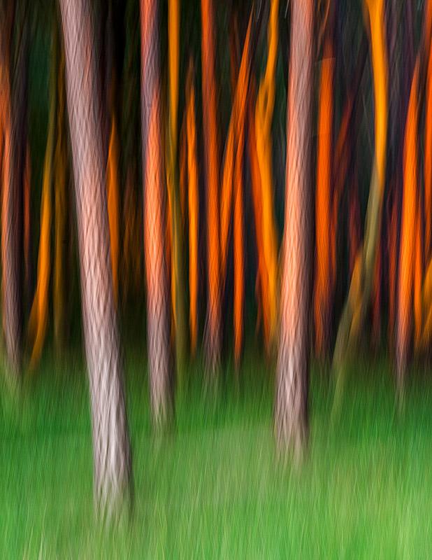 Kreative Fotos mit bewegter Kamera: Gerührt & geschüttelt; © Hans-Peter Schaub