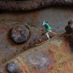 Kleine Welten im Fokus - Makrofotografie, © Klaus Wohlmann