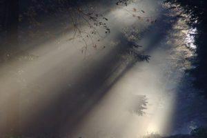 Nebel © Websi auf Pixabay