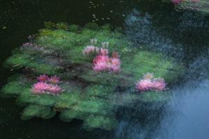 Hans-Peter Schaub: Kreative Landschaftsfotografie