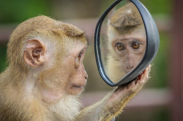 Photo Challenge, im Spiegel, © Andre Mouton / Pixabay