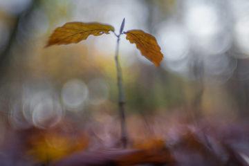 Wunder am Wegrand - Makrofotografie im Herbst - mit Hans-Peter Schaub