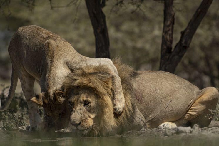Afrikas wilder Süden (c) Paul Kornacker