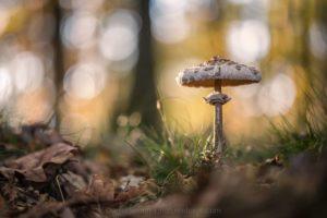 Naturfotografie im Herbst, © Daniel Spohn